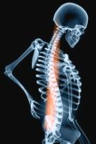 Skeleton & Spine