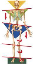 Skeleton unbalanced from the feet